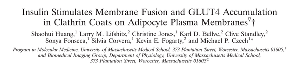 Insulin Stimulates Membrane Fusion and GLUT4 Accumulation in Clathrin Coats on Adipocyte Plasma Membranes