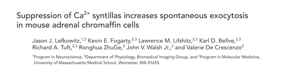 Suppression of Ca2+ syntillas increases spontaneous exocytosis in mouse adrenal chromaffin cells