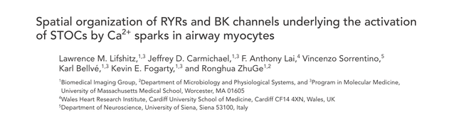 Spatial organization of RYRs and BK channels underlying the activation of STOCs by Ca(2+) sparks in airway myocytes.