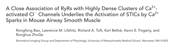 A Close Association of RyRs with Highly Dense Clusters of Ca2+- activated ClϪ Channels Underlies the Activation of STICs by Ca2+ Sparks in Mouse Airway Smooth Muscle